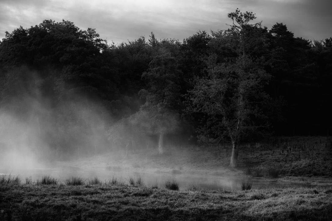Ljuset och dimman bw